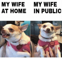 Memes, Home, and Wife: MY WIFE  MY WIFE  AT HOME IN PUBLIC  LILY LU