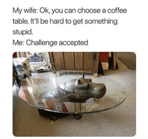 Dank, Memes, and Reddit: My wife: Ok, you can choose a coffee  table. It'll be hard to get something  stupid  Me: Challenge accepted Challenge Accepted by StrangeClownRabbit FOLLOW 4 MORE MEMES.