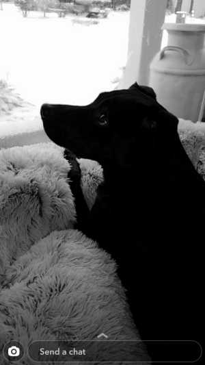 My wife takes a lot of snaps of our pup, this is one of my favorites. Meet Sophie.: My wife takes a lot of snaps of our pup, this is one of my favorites. Meet Sophie.