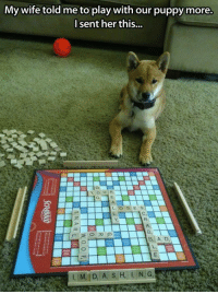 This D: My wife told me to play with our puppy more.  I sent her this...  D,  O S E S  B,  Bil A. D