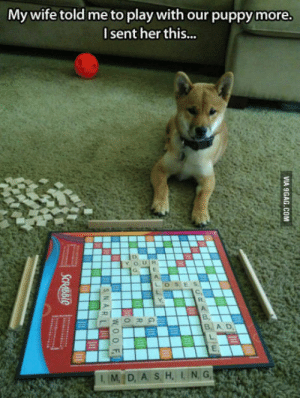 Time, Wife, and Her: My wife told me to play with our puppymore.  l sent her this...  L'OSİES  C,  R.  в,  B. A D  IM,ID, A S. H, IN, G, Quality Time With My Dog