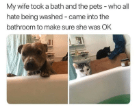 Pets, Wife, and Who: My wife took a bath and the pets- who all  hate being washed - came into the  bathroom to make sure she was OK what did we do to deserve pets