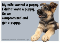 Yep!: My wife wanted a puppy.  I didn't want a puppy  So we  compromised and  got a Puppy.  Facebook: German shepherds Tips Yep!