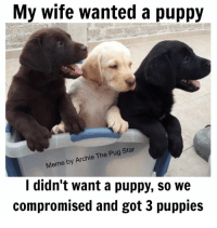 Happy Wife, Happy Life!: My wife wanted a puppy  Meme by Archie The Pug Star  I didn't want a puppy, so we  compromised and got 3 puppies Happy Wife, Happy Life!