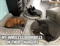 Aww, Chargers, and Ing: MY WIRELESS DOORBELLS  ON THEIR CHARGERS  ing  www.fibrora *woof* (x-post from r/aww)