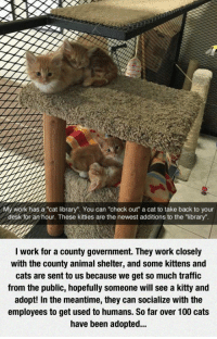 """Anaconda, Cats, and Kitties: My work has a""""cat library"""". You can """"check out"""" a cat to take back to your  desk for an hour. These kitties are the newest additions to the """"library"""".  I work for a county government. They work closely  with the county animal shelter, and some kittens and  cats are sent to us because we get so much traffic  from the public, hopefully someone will see a kitty and  adopt! In the meantime, they can socialize with the  employees to get used to humans. So far over 100 cats  have been adopted.. <p>Cat Library Is The Best Idea Ever.</p>"""