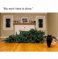 """Funny, Work, and Cat: """"My work here is done.""""  PAAR Every cat mission"""