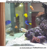 laughoutloud-club:  Finding Nemo Tank: Mydentisthasasenseofhumorc.  you should probably go to TheMetaPicture.com laughoutloud-club:  Finding Nemo Tank
