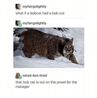 Memes, Bobcat, and 🤖: myfairgolightly  what if a bobcat had a bob cut  myfairgolightly  wired-but-tired  that bob cat is out on the prowl for the  manager her name is Janet - Max textpost textposts