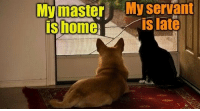 Memes, True, and Dog: Mymaster  ishome  My  servant  is late True difference between a cat and a dog. via /r/memes https://ift.tt/2EhVqch