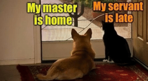 Home, Servant, and  Late: Mymaster My servant  is late  is home