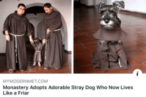 Heartwarming to see the good boi being cared for via /r/wholesomememes https://ift.tt/30gkEDS: MYMODERNMET.COM  Monastery Adopts Adorable Stray Dog Who Now Lives  Like a Friar Heartwarming to see the good boi being cared for via /r/wholesomememes https://ift.tt/30gkEDS
