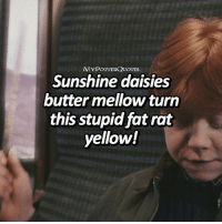 Harry Potter, Memes, and Fat: MYPOTTERQUOTES  Sunshine daisies  butter mellow turn  this stupid fat rat  yellow! QOTD: What's your favorite Harry Potter spell?? ⚡️⚡️ = Follow @mypotterfacts @bookgasms and @mypotterscenes for more of my posts!⚡️