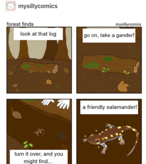 What are salamanders? via /r/wholesomememes https://ift.tt/362cQ82: mysillycomics  forest finds  mysillycomics  look at that log  go on, take a gander!  a friendly salamander!  turn it over, and you  might find... What are salamanders? via /r/wholesomememes https://ift.tt/362cQ82