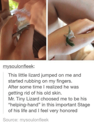 "Life, Time, and Old: mysoulonfleek:  This little lizard jumped on me and  started rubbing on my fingers.  After some time I realized he was  getting rid of his old skin  Mr. Tiny Lizard choosed me to be his  ""helping-hand"" in this important Stage  of his life and I feel very honored  Source: mysoulonfleek Im the chosen one!"
