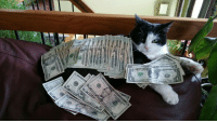mysticwiki:This is the money cat, reblog in the next 24 hours and money will come your way!: mysticwiki:This is the money cat, reblog in the next 24 hours and money will come your way!