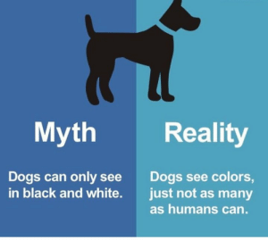 Dogs, Black, and Black and White: Myth Reality  Dogs can only see  in black and white.  Dogs see colors,  just not as many  as humans can. RT @MYTHvsFACTS: https://t.co/8NExAyiJYA