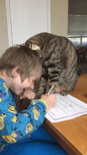 "everythingfox:  ""My nephew had the best interruption while trying to do his homework"" (Source)   Is it me or is that cat enormous?: n 0.99 everythingfox:  ""My nephew had the best interruption while trying to do his homework"" (Source)   Is it me or is that cat enormous?"