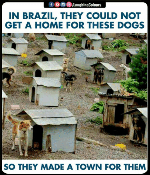 Dogs, Brazil, and Home: N BRAZIL, THEY COULD NOT  GET A HOME FOR THESE DOGS  SO THEY MADE A TOWN FOR THEM