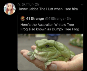 The Aussies think they slick by SvenGz MORE MEMES: n. @_fflur 2h  I know Jabba The Hutt when I see him  41 Strange @41Strange 3h  Here's the Australian White's Tree  Frog also known as Dumpy Tree Frog The Aussies think they slick by SvenGz MORE MEMES