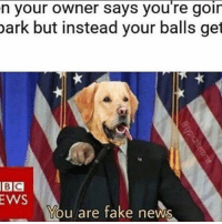 America, Fake, and Funny: n your owner says you re goin  park but instead your balls get  BIC  EWS  You are fake news FAKE NEWS! 🔴www.TooSavageForDemocrats.com🔴 JOINT INSTAGRAM: @rightwingsavages Partners: 🇺🇸👍: @The_Typical_Liberal 🇺🇸💪@theunapologeticpatriot 🇺🇸 @DylansDailyShow 🇺🇸 @keepamerica.usa 🇺🇸@Raised_Right_ 🇺🇸@conservative.female 😈 @too_savage_for_liberals 🇺🇸 @Conservative.American DonaldTrump Trump HillaryClinton MakeAmericaGreatAgain Conservative Republican Liberal Democrat Ccw247 MAGA Politics LiberalLogic Savage TooSavageForDemocrats Instagram Merica America PresidentTrump Funny True sotrue