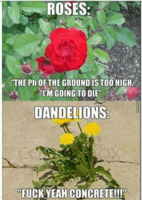 me irl: ROSES  THE Ph OF THE GROUND IS TOO HIGH  IM GOING TO DIE  DANDELIONS  FUCK YEAH CONCRETE!!! me irl