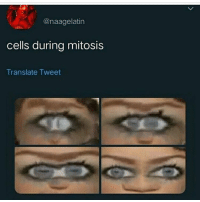 what IS IT WITH THIS MILEY MEME: @naagelatin  cells during mitosis  Translate Tweet what IS IT WITH THIS MILEY MEME