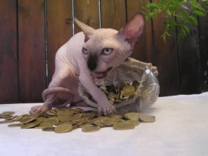"""naamahdarling:  capteinwayfinder:  what the FUCK kind of dragon is that  i don't know but i'm reblogging it because i'm afraid it's one of those """"REBLOG THIS CREATURE AND GET WEALTH"""" memes in disguise, and if I don't, it's going to come to my house, steal everything of value I own, piss on the rest, and leave without even letting me pet it. : naamahdarling:  capteinwayfinder:  what the FUCK kind of dragon is that  i don't know but i'm reblogging it because i'm afraid it's one of those """"REBLOG THIS CREATURE AND GET WEALTH"""" memes in disguise, and if I don't, it's going to come to my house, steal everything of value I own, piss on the rest, and leave without even letting me pet it."""