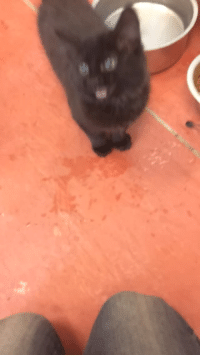 Tumblr, Blog, and Http: naamahdarling: fartgallery: please listen to this kitten I met today TRANSCRIPT: Kitten: BEEPBEepbeepbeepbeepbeep. People: *surprised and delighted laughter*