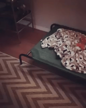 Bad, Bad Day, and Definitely: naamahdarling:  micaxiii:  sdavid09:  babyanimalgifs: if you're having a bad day, watch this  Oh my heart!!! 😍😍😍   when the dog yawns and the cat's head is in their mouth for like two seconds lol  This cat DEFINITELY sees the dog as a big dumb clumsy baby that needs caring for, and loves it very much.