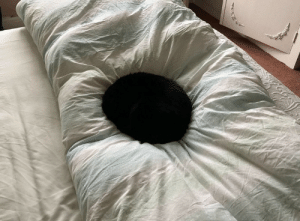 naamahdarling:  thecutestcatever: The void is beautiful and I love him  To pet this cat, you have to certify that you are not Anish Kapoor or petting it on his behalf. : naamahdarling:  thecutestcatever: The void is beautiful and I love him  To pet this cat, you have to certify that you are not Anish Kapoor or petting it on his behalf.
