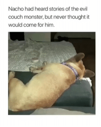 Memes, Monster, and Couch: Nacho had heard stories of the evil  couch monster, but never thought it  would come for him you will be missed, Nacho ⚰
