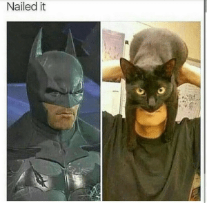 Dank, Memes, and Target: Nailed it Imma try this with my cat by 2Speedy MORE MEMES