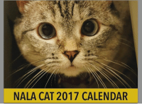 Hello my friends, last chance to get yours 2017 calendar from me and @white_coffee_cat_ $6.95 for 1 for $10.95 for 2! www.nalacat.com: NALA CAT 2017 CALENDAR Hello my friends, last chance to get yours 2017 calendar from me and @white_coffee_cat_ $6.95 for 1 for $10.95 for 2! www.nalacat.com