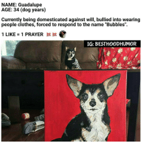 "Clothes, Memes, and Prayer: NAME: Guadalupe  AGE: 34 (dog years)  Currently being domesticated against will, bullied into wearing  people clothes, forced to respond to the name ""Bubbles"".  1 LIKE 1 PRAYER  IG: BEST HOOD HUMOR Try To Comment ""GUADALUPE"" Letter By Letter Without Getting Interrupted. 🔥🔥 @hoodmafia"