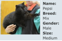 Target, Tumblr, and Yeah: Name:  Pepsi  Breed  Mix  Gender:  Male  Size:  Medium minerva-is-a-robot: *drives up to the humane society and yells out my window* YEAH I'D LIKE A MEDIUM PEPSI