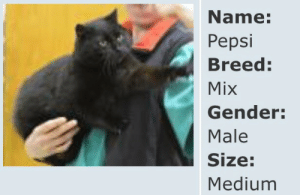 Tumblr, Yeah, and Pepsi: Name:  Pepsi  Breed  Mix  Gender:  Male  Size:  Medium minerva-is-a-robot: *drives up to the humane society and yells out my window* YEAH I'D LIKE A MEDIUM PEPSI