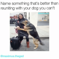 Maximus, Memes, and 🤖: Name something that's better than  reuniting with your dog you can't  post  @maximus thegsd This gave us all the feels. dogreunions Original vid via @maximus.thegsd
