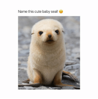 Omg @buddy.ig has the cutest animals! ❤️ @buddy.ig 🙊 @buddy.ig 🐶 @buddy.ig 😎: Name this cute baby seal! Omg @buddy.ig has the cutest animals! ❤️ @buddy.ig 🙊 @buddy.ig 🐶 @buddy.ig 😎