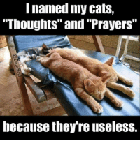 """thoughts and prayers: named my cats,  """"Thoughts"""" and """"Prayers""""  because they re useless."""