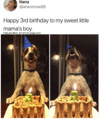 Birthday, Memes, and Happy: Nana  ariannnna98  Happy 3rd birthday to my sweet little  mama's boy  Featured wll ent (million page only)  gor 😂🐶