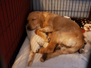 Nap time is better with a friend!: Nap time is better with a friend!
