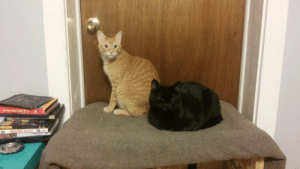 kitten-pics:  My boys girlfriend is over for the weekend: NAPOLEON DYNAMITE  WATCHMEN  WAGONS EAST  Pra kitten-pics:  My boys girlfriend is over for the weekend