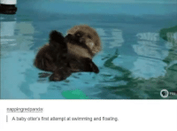 Baby, It's Cold Outside: nappingredpanda  A baby otter's first attempt at swimming and floating