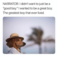 """Girl, Good, and Boy That: NARRATOR: I didn't want to just be a  """"good boy."""" I wanted to be a great boy.  The greatest boy that ever lived Where do they get a hat that small 😂 dog dogsofinstagram goodboy memesdaily memeaccount"""