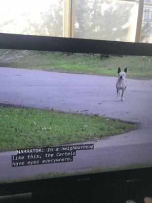 doggos-with-jobs:Came across this gem. Meirl: NARRATOR: In a neighborhood  like this, the Cartels  have eyes everywhere  SONY doggos-with-jobs:Came across this gem. Meirl