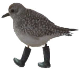 nasterbate: yoogadickman:  smallcub:  can someone from the science side of tumblr explain this to me?  Bird no want wet feet, bird shoes  thank you science side of tumblr : nasterbate: yoogadickman:  smallcub:  can someone from the science side of tumblr explain this to me?  Bird no want wet feet, bird shoes  thank you science side of tumblr