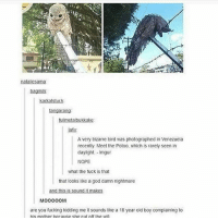 Fucking, God, and Memes: natallesama  bagmlk  karkatstuck  tangarang  tullmetalbukkake  lafs  A very bizarre blrd was photographed in Venezuela  recently Meet the Potoo, which is rarely seen in  daylight, Imgur  NOPE  what the fuck is that  that looks like a god damn nightmare  and this is sound it makes  MoOOOOM  are you fucking kidding me it sounds lke a 18 year old boy complaining to  his mother because she cut off the wif 🗣M O M - Max textpost textposts