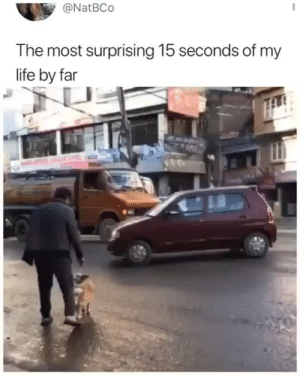 Well just damn. Need to step up my street crossing game.Tw:@natbcoVia @_theblessedone: @NatBCo  The most surprising 15 seconds of my  life by far Well just damn. Need to step up my street crossing game.Tw:@natbcoVia @_theblessedone