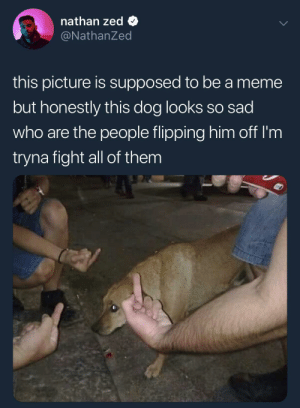 The saddest photo by NoblePancake FOLLOW HERE 4 MORE MEMES.: nathan zed Q  @NathanZed  this picture is supposed to be a meme  but honestly this dog looks so sad  who are the people flipping him off I'm  tryna fight all of them The saddest photo by NoblePancake FOLLOW HERE 4 MORE MEMES.